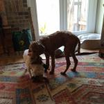 Kat and Will Chemelewski's playful pups Ivy and Rufus.